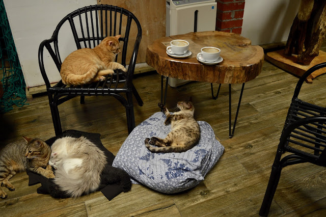 London Cat Village review