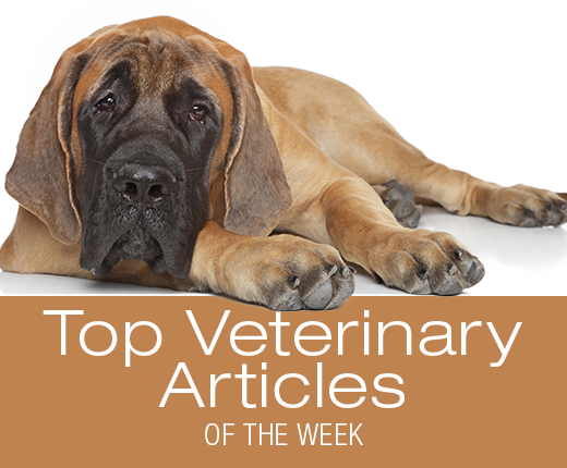 Top Veterinary Articles of the Week: Hookworms, Vaccines, and more ...