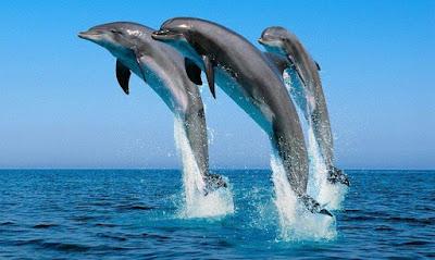Excursiones de pesca turismo para avistar el delfín mular