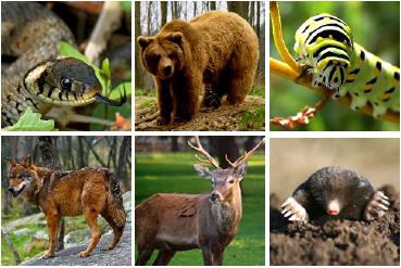 Resultado de imagen para fauna en los bosques tortugas topos