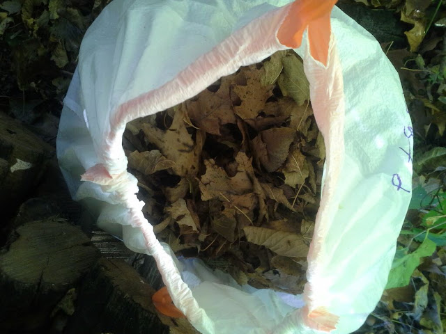 making leaf mould compost in a bag