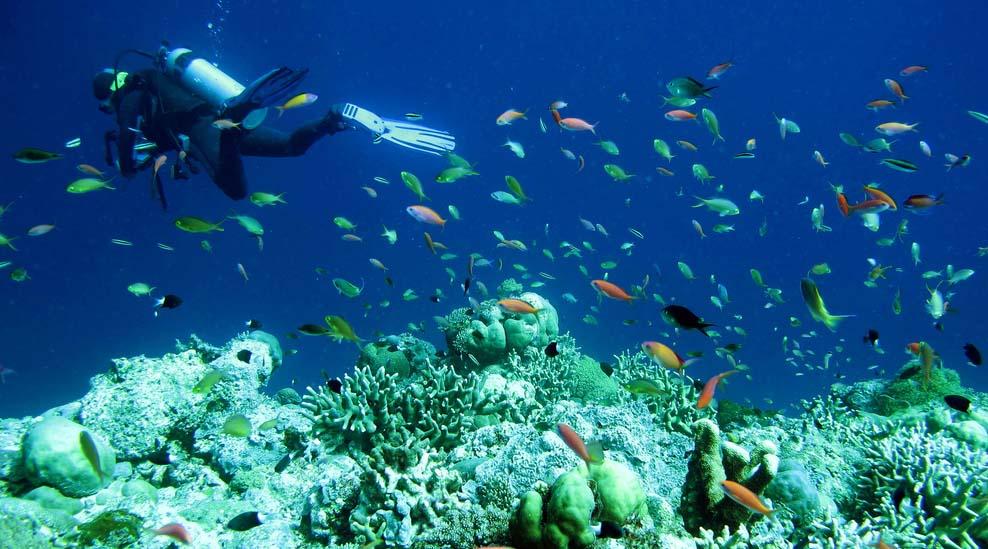 wisata bawah laut dengan