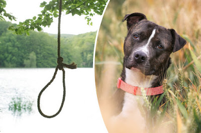 Female Dog Found Raped and Hanged From Tree