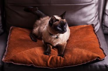 http://www.sweetiekitty.com/giveaways/win-a-self-heating-cat-cushion/?lucky=64