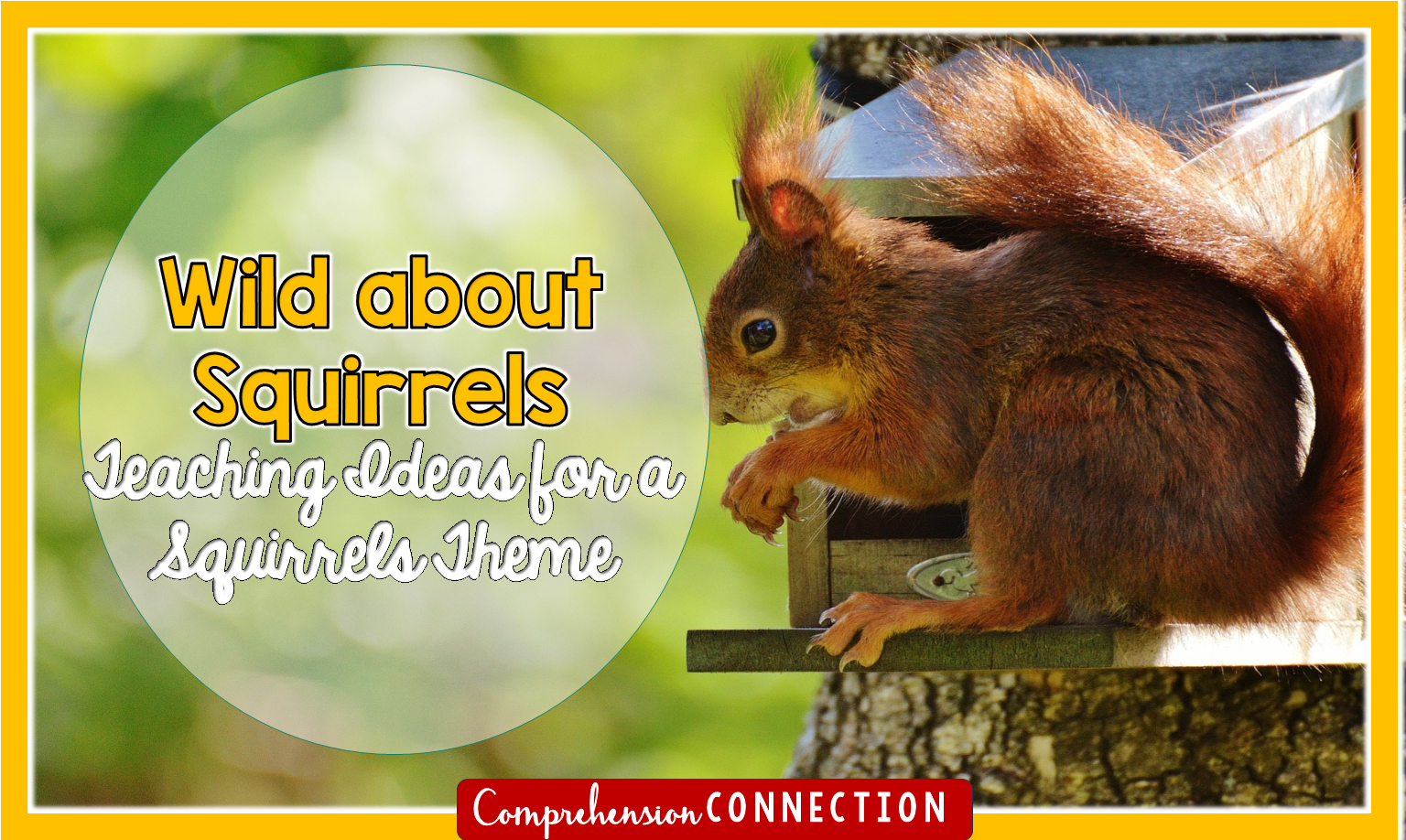 Fall means the squirrels get active, and they're fascinating to watch. Check out this post for a collection of fun squirrel themed teaching ideas for the squirrel lovers in your room.