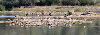 All the birds we had chased up the river