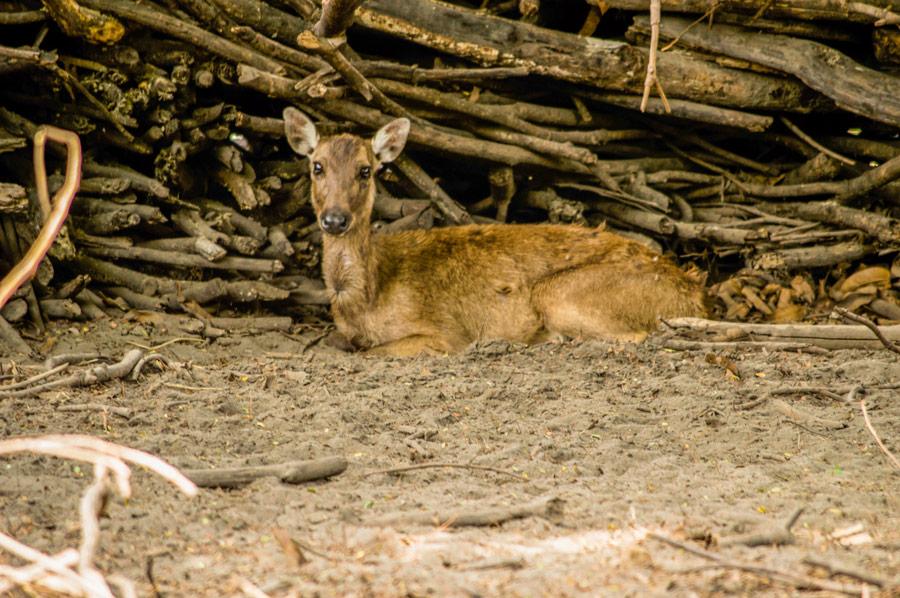 Brown Deer Botolan Wildlife Farm
