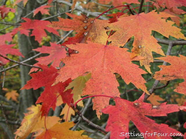 Canadian maple leaves from Setting for Four