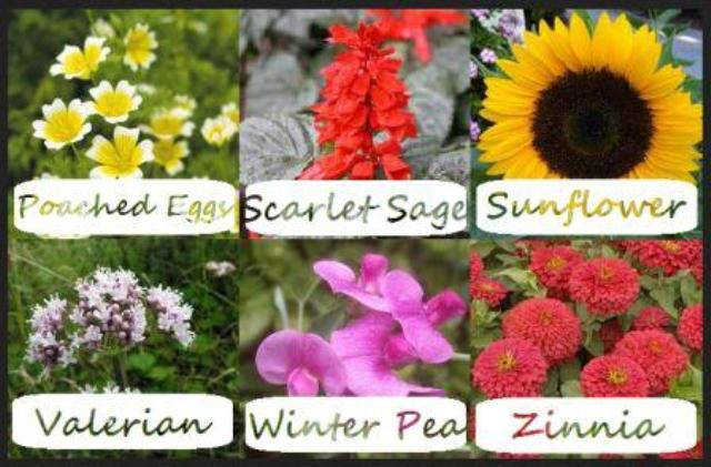 Different Flower Names
