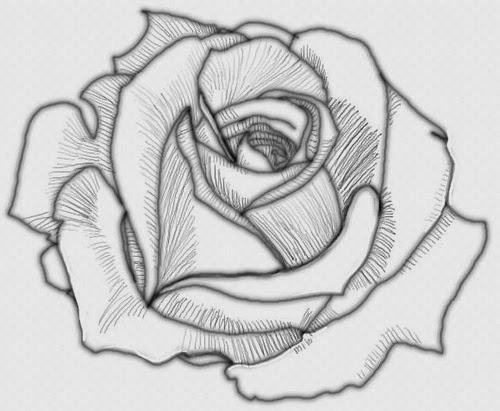 Rose Drawing Flowers Wallpaper