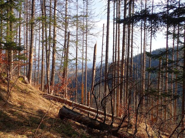 Widoki z Nosalowej Przełęczy