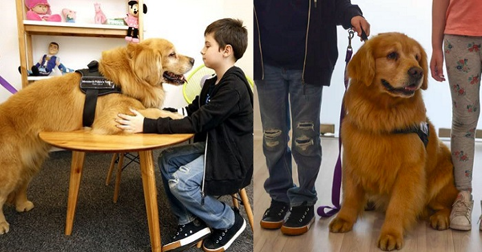 Meet Titan, The First Therapy Dog For Abused Children