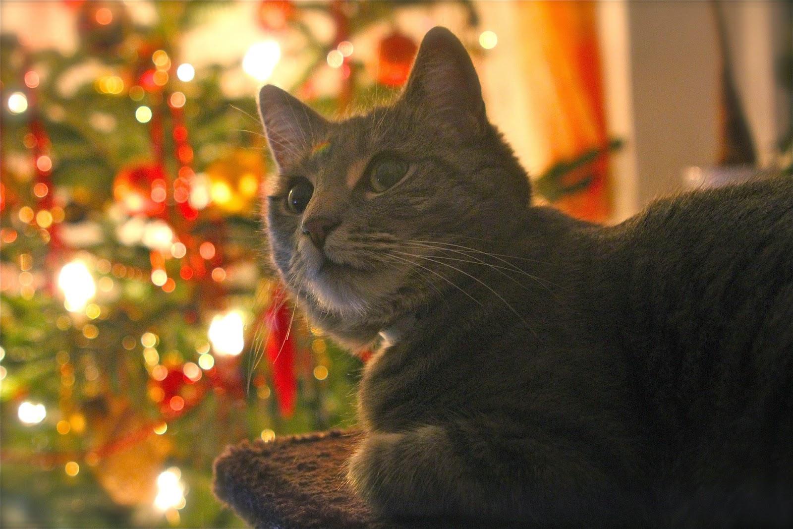 Kissa Kuva
