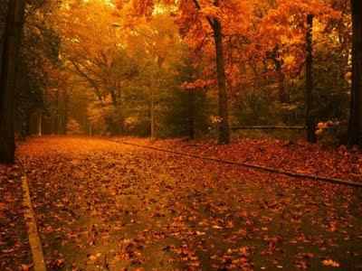 camino-entre-arboles-cubierto-por-sus-hojas