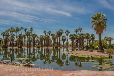 Water with reflection of palm trees in Papago Park