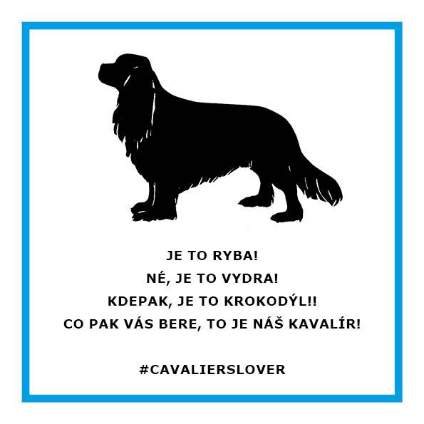 8d9e28f4d95 Kavalír vodní (cavalier aqua)