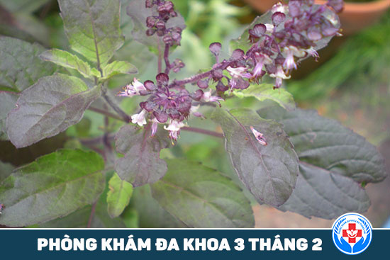 HCM - 5 loại thảo dược mà bạn có thể trồng tại ban công 5-loai-thuoc-thao-duoc-ma-ban-co-the-trong-tai-ban-cong-5
