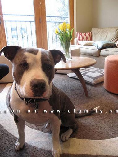 Bí quyêt lựa chọn nội thất phù hợp khi nhà nuôi thú cưng