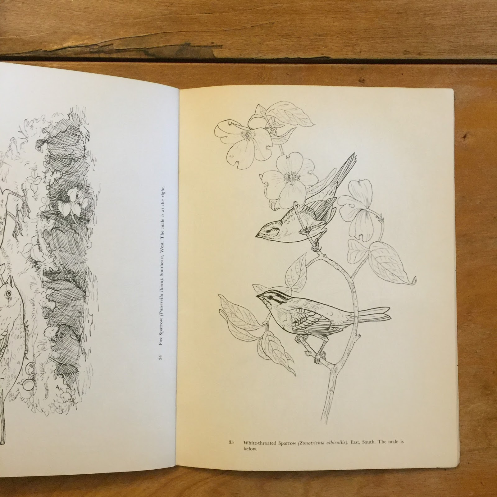 Blank pages to color on -  Of The Blank Page But We Are Very Fond Of Audubon S Art And The Pages In Audubon S Birds Of America Coloring Book Are So Beautiful And Fun To Color