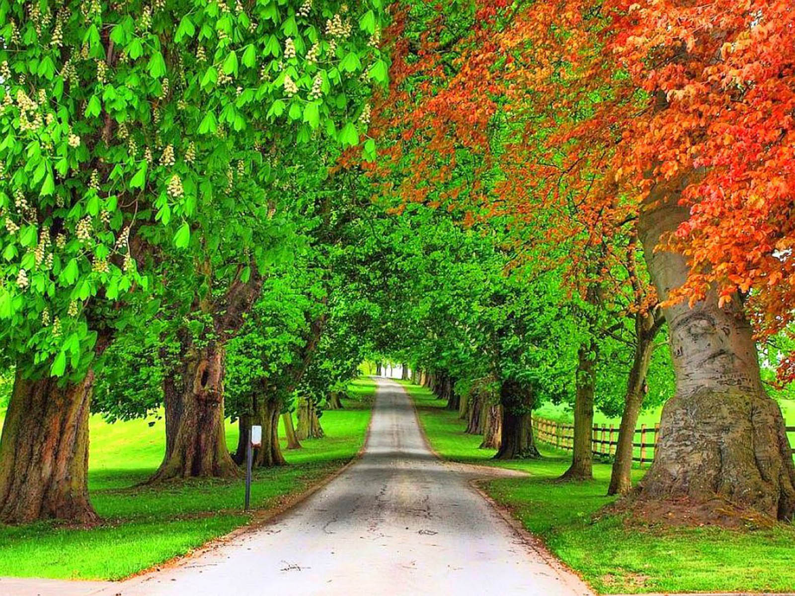Download Free 3d Wallpapers For Windows 8 Wallpapers Trees Wallpapers