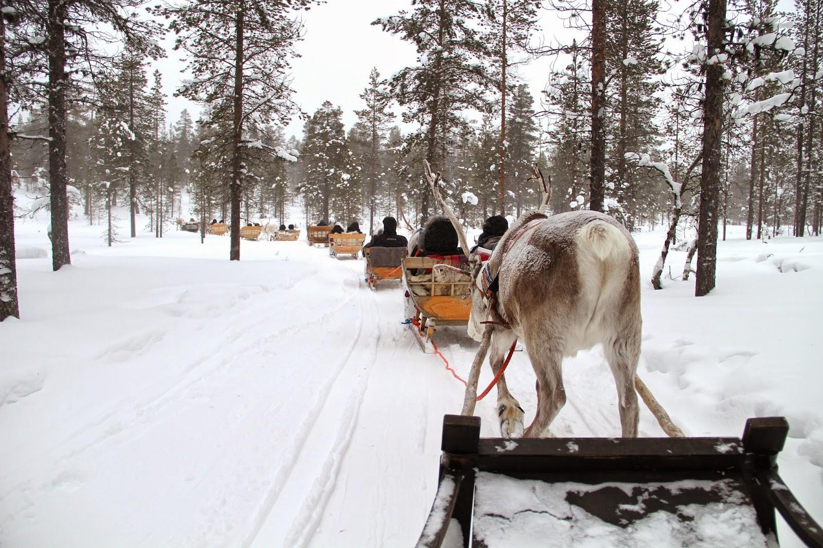 Arctic Circle Reindeer Sled