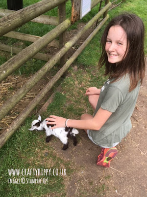 Little Hippy stroking one of the baby goats at Baylham Rare Breeds Farm in Suffolk