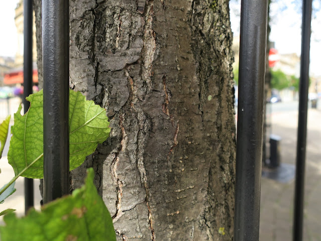 Bark and Leafy behind bars.