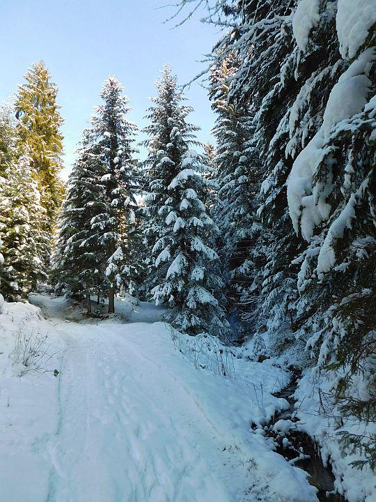 Biało na drodze, a nad nią oprószone białym gałązki drzew.