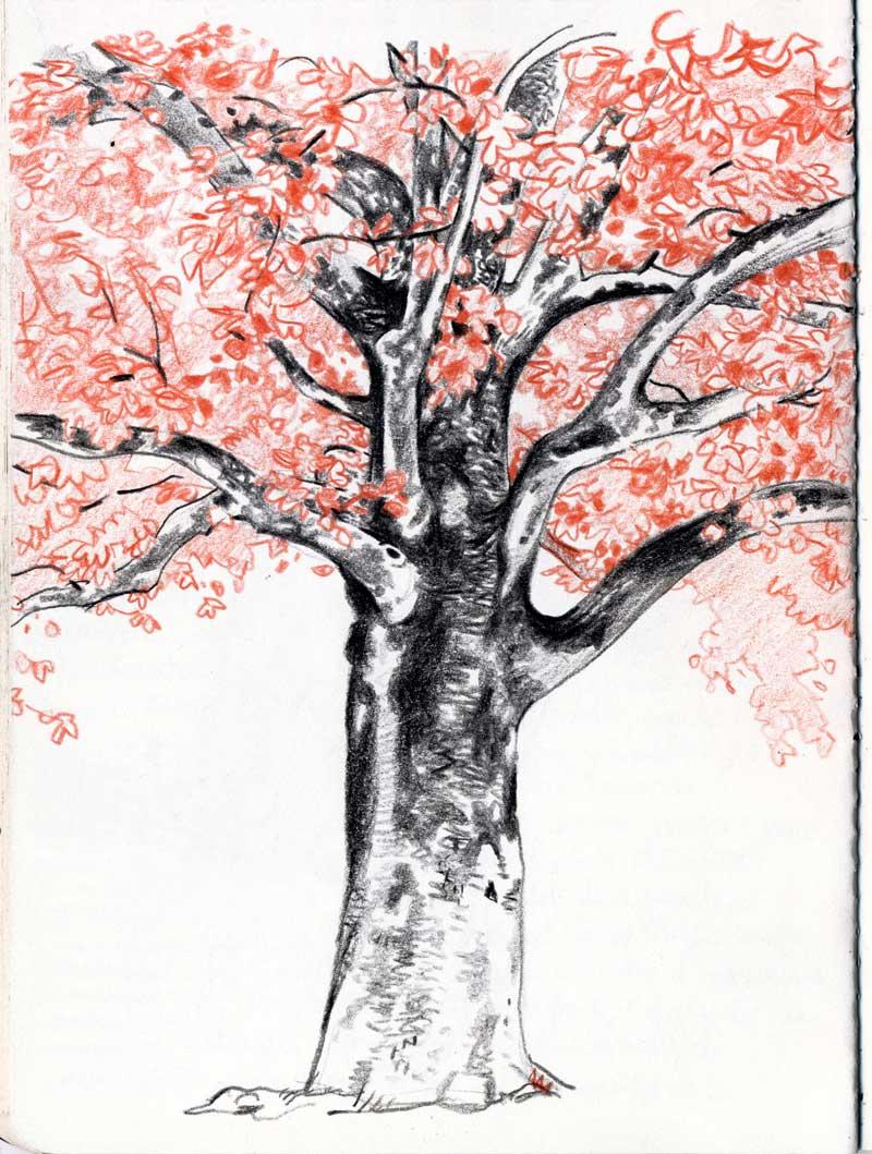 Disegnare alberi 1  La distanza dei miei occhi  Topipittori