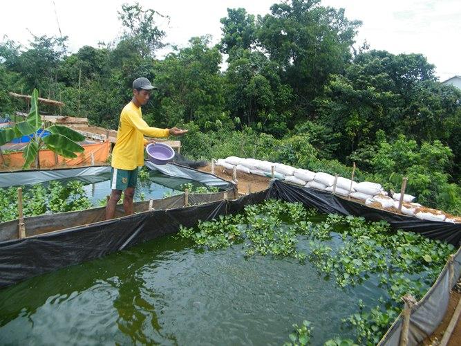 Tahap Memulai Budidaya Ikan Lele | Terpental Semua