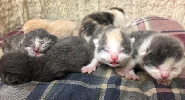 Cô mèo 9 tháng tuổi mang theo bụng bầu, chạy vào viện cứu trợ động vật để xin được giúp đỡ