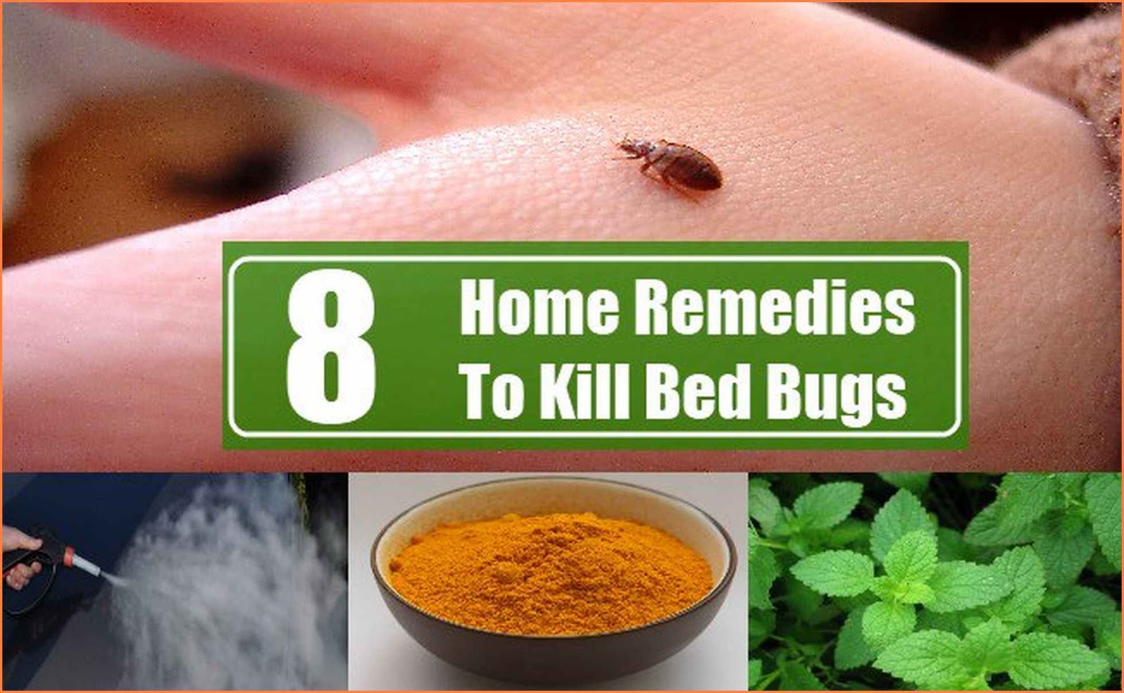 How To Kill Bed Bugs Natural Remedies - Caraway Seeds ...