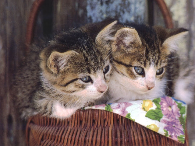 mejores imagenes de dile que tu me quieres, teamoimagenes.com