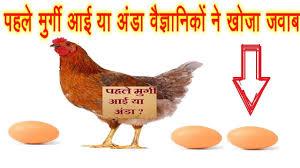 मुर्गी पहले आई या अंडा ? अब जवाब मिल गया - Pahle murgi aayi ya anda - Jawab hajir hai