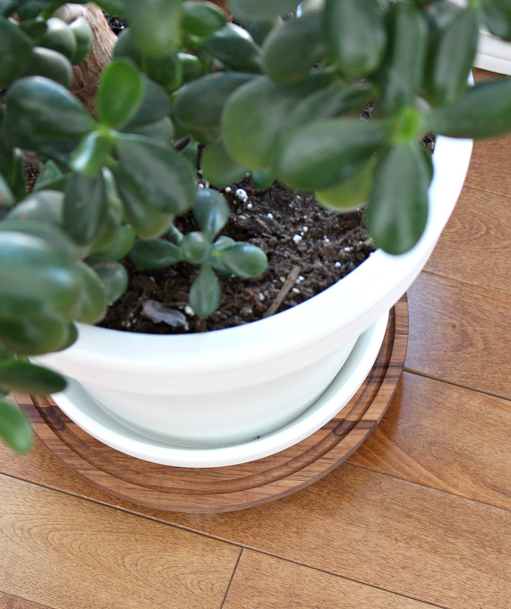 Easy DIY Walnut Plant Dolly