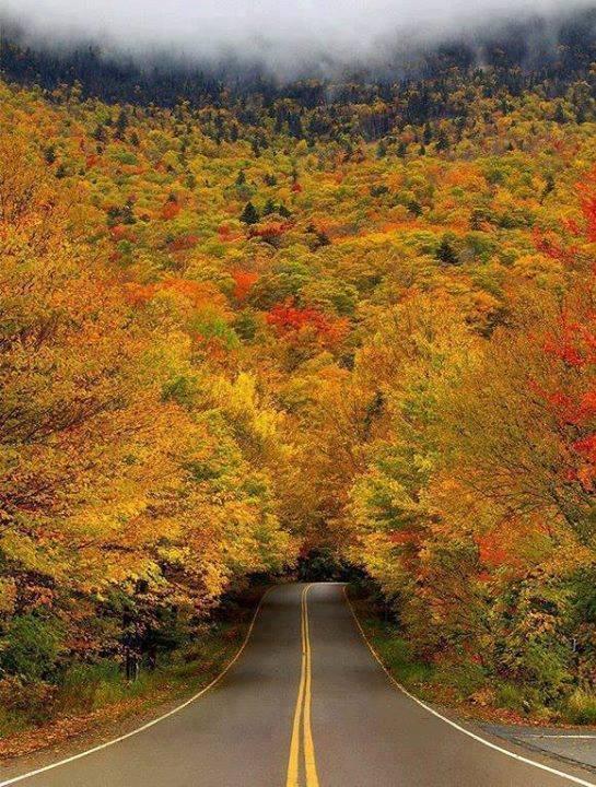 Pohon tunnel musim gugur di USA