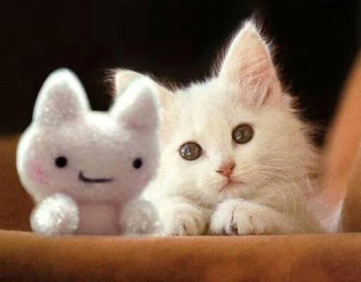 gatito blanco con peluche