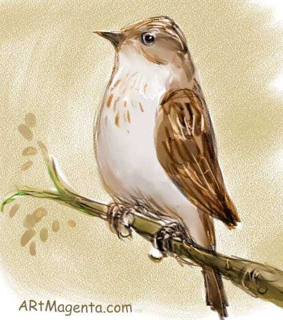 Spotted Flycatcher, a bird painting by Artmagenta