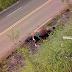 Cavalo que estava na PR 158 foi removido pela prefeitura de Laranjeiras