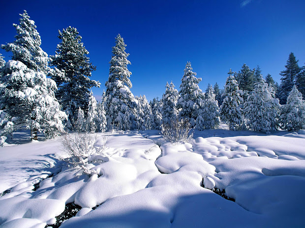 Wallpapers Snow