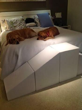 labradar na cama