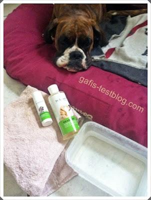 Boxer Amy genießt die Pflege mit den Produkten von Dr. Schaette