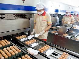 Tuyển 16 lao động đóng gói trứng tại Nhật Bản