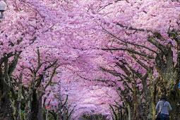 Keajaiban Islam di Negeri Sakura