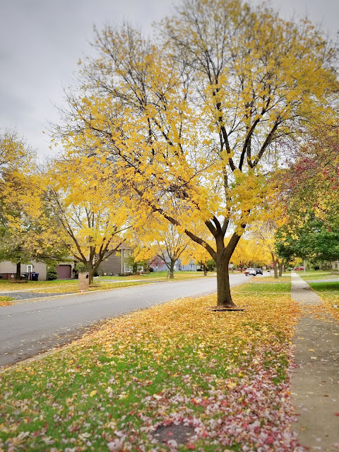 street with fall foliage in naperville