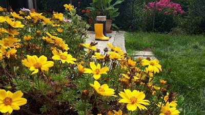 kalosze, kwiaty, słońce i deszcz