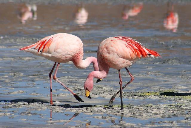 Güzelliğiyle Tüm Dünyayı Büyüleyen En Dünyanın En Güzel Kuşları - Flamingo - Kurgu Gücü