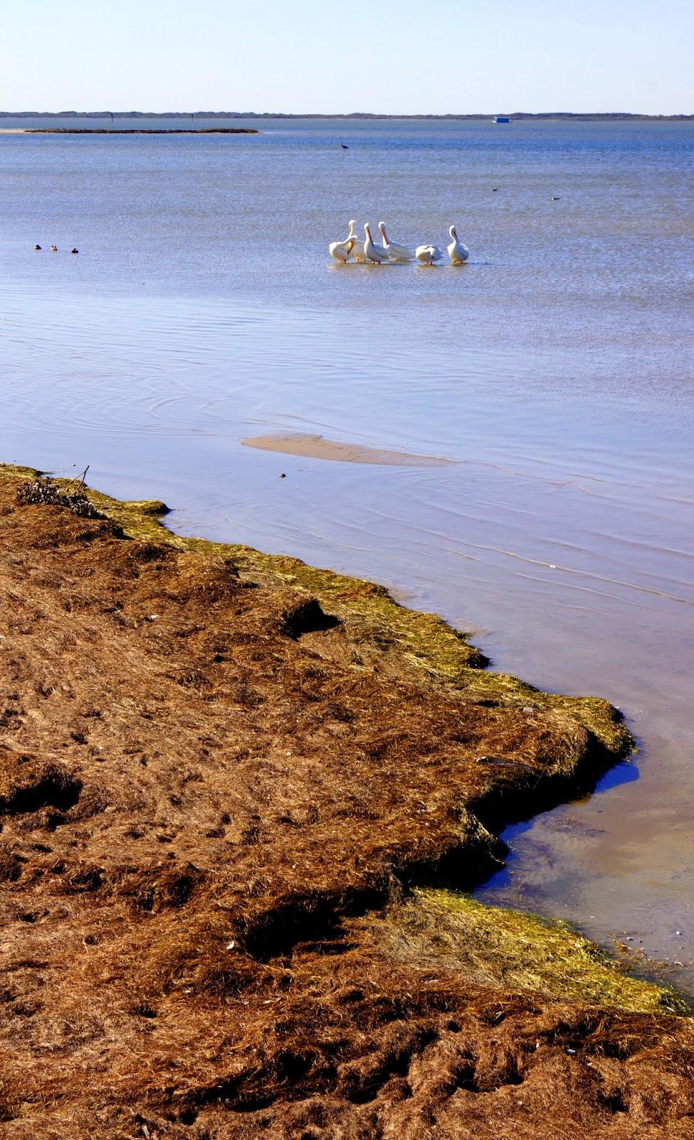 Corpus Christi Subaru >> Dancing 'Cross the Country: Padre Island National Seashore ...