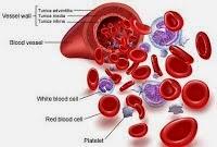 Bagian Darah