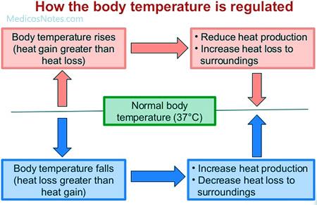 Body temperature regulation pasoevolist body temperature regulation ccuart Images